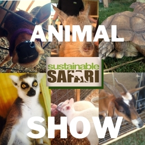 Sustainable Safari Animal Show